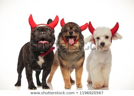 愛らしい 子犬 着用 悪魔 ハロウィン ストックフォト © feedough