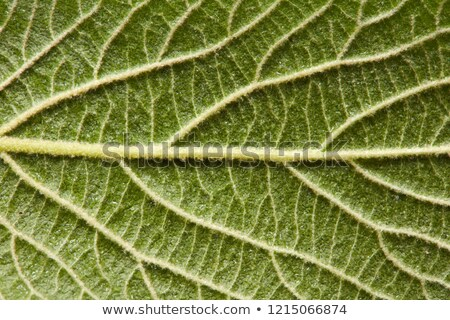 green leaf detailed macro photo as a natural layout for your ideas flat lay stock photo © artjazz