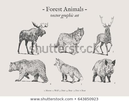 Ikon szürke farkas izolált erdő állat Stock fotó © MarySan