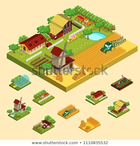 Dog Vegetable Garden Illustration Stock photo © lenm