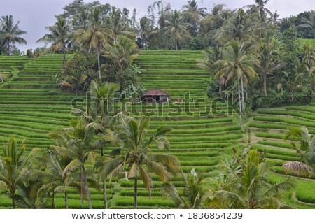 Terras landbouw heuvel illustratie ontwerp tuin Stockfoto © colematt