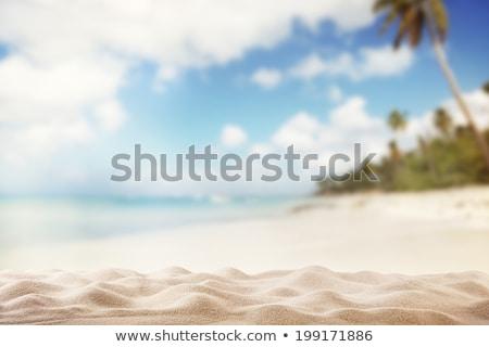 gaivotas · praia · voador · mediterrânico · mar · pôr · do · sol - foto stock © liolle