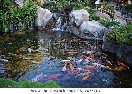 Ryb charakter staw ilustracja krajobraz projektu Zdjęcia stock © colematt