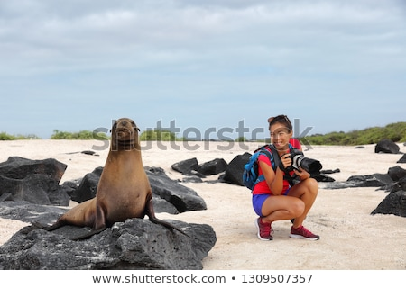 animal wildlife nature photographer tourist looking at galapagos sea lion stock photo © maridav