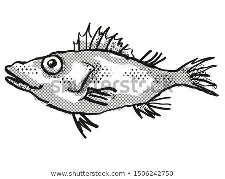 Longsnout No-line Scorpionfish Australian Fish Cartoon Retro Drawing Stock photo © patrimonio
