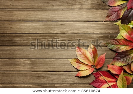 Autumn leaves over wooden background with copy space stock photo © galitskaya