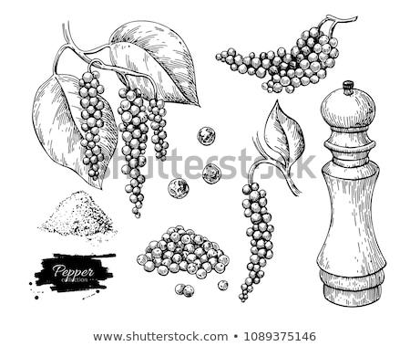 spice grinder Stock photo © FOKA