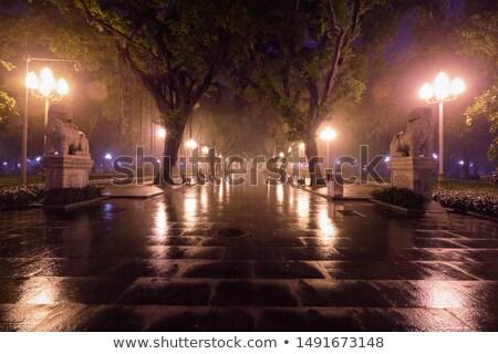 Narodów parku przeciwmgielne noc Chiny mgły Zdjęcia stock © dmitry_rukhlenko