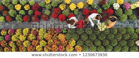 питомник цветы растений саду цветок дома Сток-фото © stoonn
