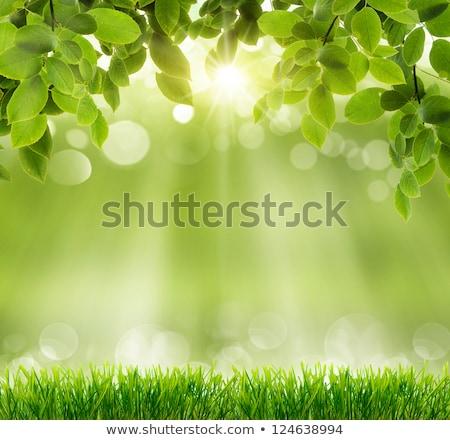 Groen gras Blauw boom gras natuur Stockfoto © WaD