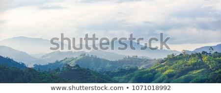 çay · tarla · dağlık · ahşap · manzara · yaz - stok fotoğraf © yuliang11