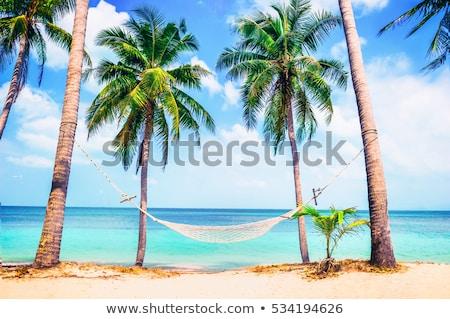 тропический · пляж · пород · пальмами · синий · морем - Сток-фото © backyardproductions