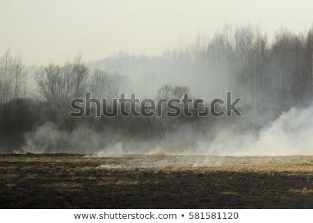 Dry tree in a field Stock photo © Kotenko