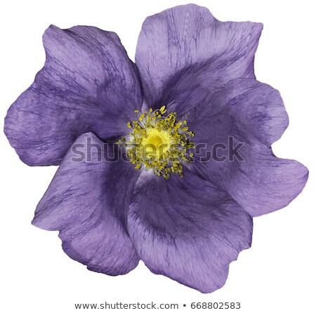 Egy virág fehér copy space szöveg virág természet Stock fotó © chesterf