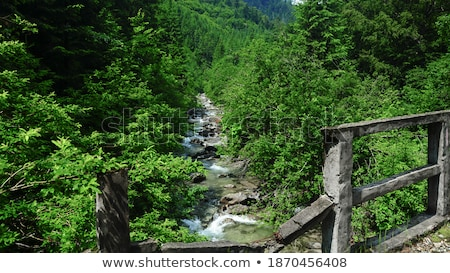 beech forest trees with river flow under stock photo © lunamarina