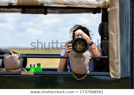 Wildlife safari Stock photo © zzve
