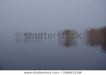 landscape with stems of reeds reflected in water stock photo © mikko