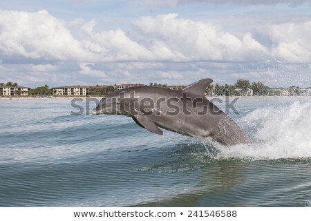 cabeça · golfinho · abrir · boca · azul - foto stock © arenacreative
