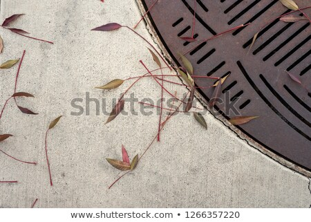 grate and leaves stock photo © elvinstar