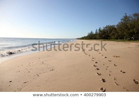human and dog foot steps along a beach stock photo © jameswheeler