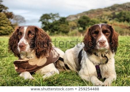 Twee mooie lever witte werken type Stockfoto © chrisga
