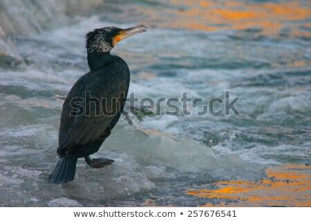 Retrato congelada rio nascer do sol água Foto stock © CaptureLight