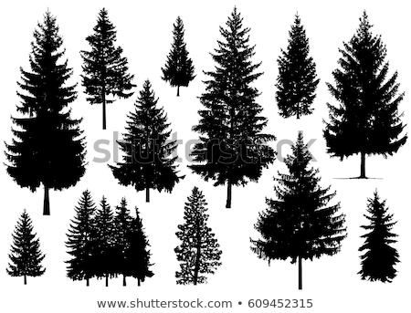 kidőlt · fa · sziluett · fehér · fa · erdő · terv - stock fotó © boroda