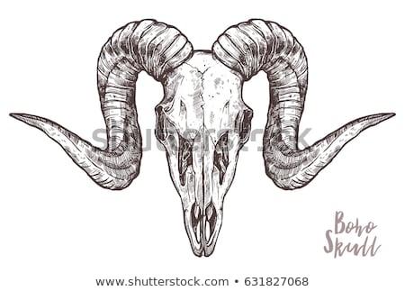 Baran czaszki oszczep czarno białe ilustracja sztuki Zdjęcia stock © lineartestpilot