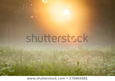 sarı · yaprak · orman · doğa - stok fotoğraf © juhku