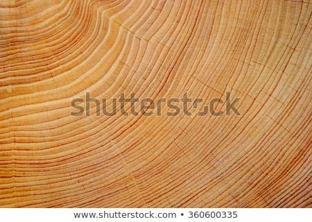Brązowy wyblakły drewna drzewo pierścień tekstury Zdjęcia stock © skylight