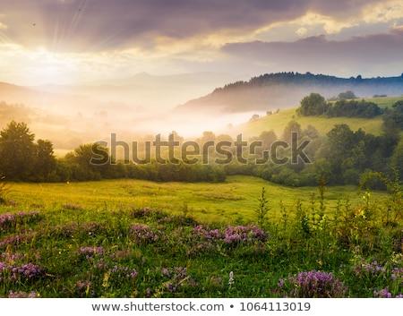 Glade bloemen zonnige weide voorjaar tuin Stockfoto © Kotenko