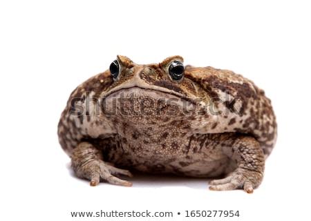 гигант жаба сокрытие дыра кожи Сток-фото © idesign