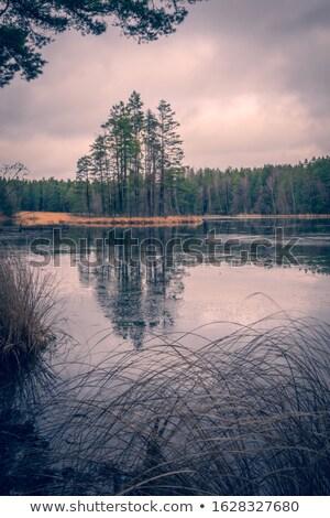 лес озеро кадр деревья мнение горные Сток-фото © Steffus