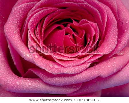 A fresh flower Stock photo © bluering