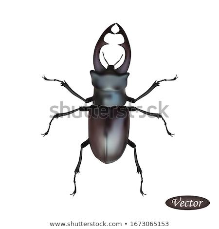 Nagy bogár szarvas agancs ikon természet Stock fotó © robuart