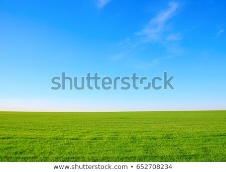 Green grass on spring field against blue clear sky Stock photo © photocreo