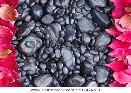 Negro rocas rojo hojas Foto stock © ozgur