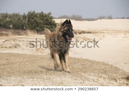 três · cães · corrida · fora · flores - foto stock © AvHeertum