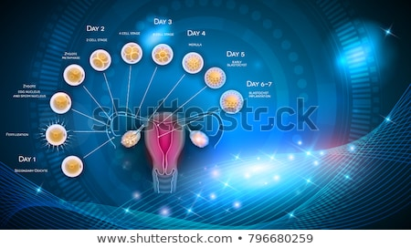 uterus and ovaries abstract background stock photo © tefi