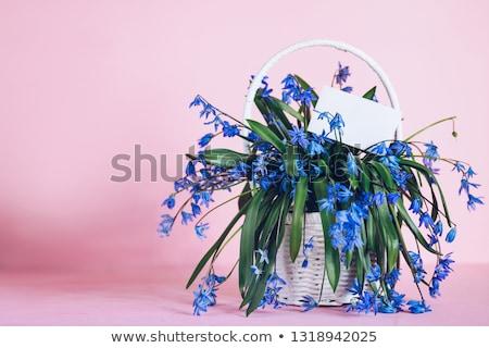 Glória neve um sinais primavera magnífico Foto stock © Klinker