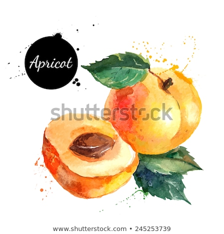 watercolor illustration of apricot with leaf stock photo © sonya_illustrations