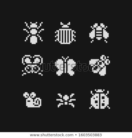 Sticker set for different types of insects Stock photo © bluering