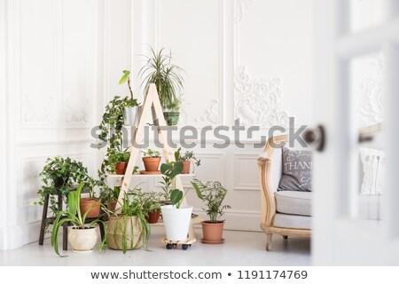 Növény zöld vánkos üvegház természet siker Stock fotó © IS2