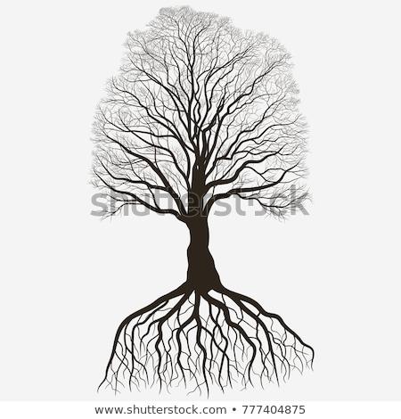 Tree Silhouette. Black bare oak outline. Detailed image. Vector Stock photo © Andrei_