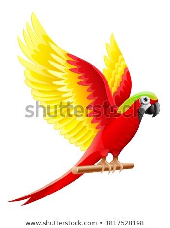 Budgerigar parrot Ara waving wings Stock photo © LoopAll