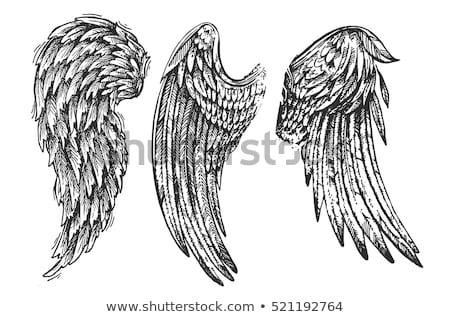 music sign with angel bird wing Stock photo © vector1st