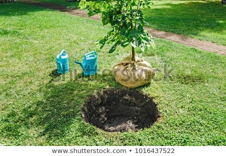 Homem agricultura pá moço ilustração jeans Foto stock © lenm