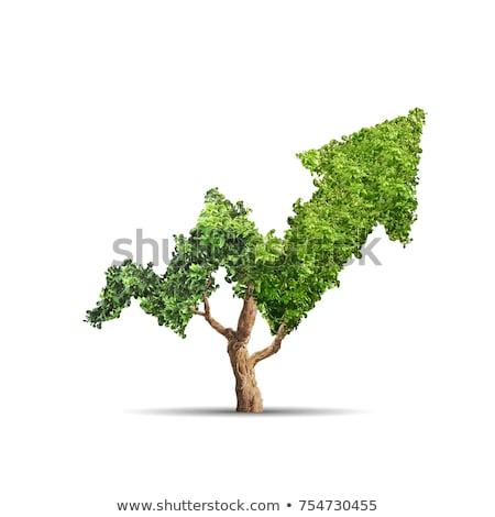 Verde seta branco neutro abstrato projeto Foto stock © ESSL