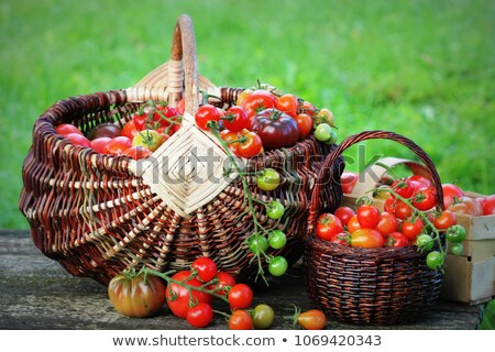 Heirloom tomatoes in baskets in garden. Harvest vegetable cooking conception Stock photo © Virgin