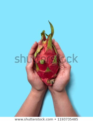 Red exotic fruit pitahaya holding female hands on a blue background with space for text. Flat lay Stock photo © artjazz